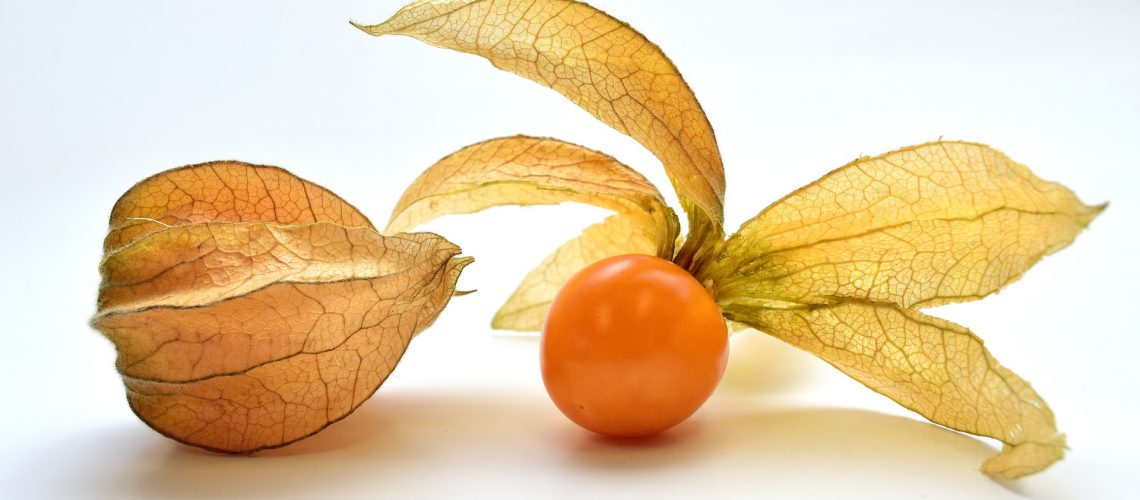 Learning More About Physalis Health Benefits