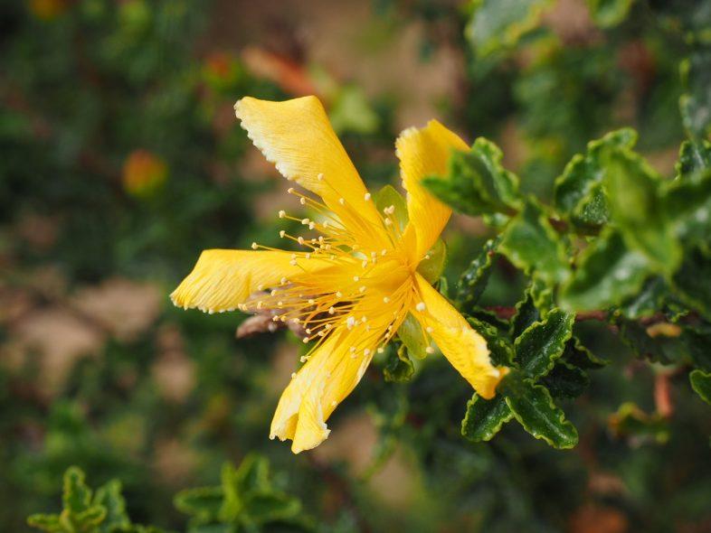 flower supplement plant
